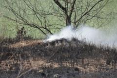 Pożar-Trynka-23-04-19-17