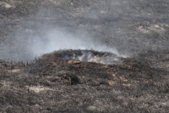 Pożar-Trynka-23-04-19-19